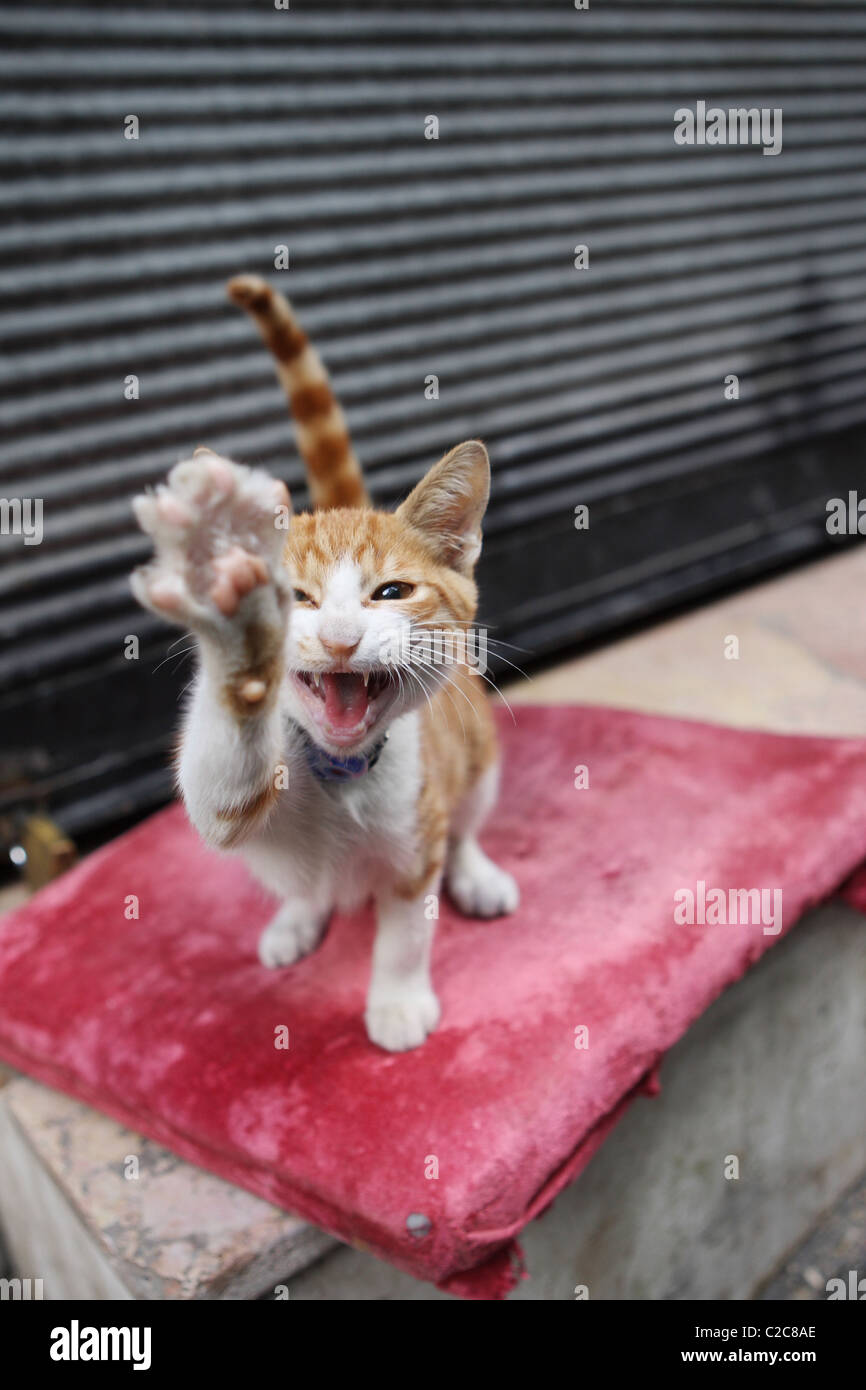 Tuerkei- Istanbul, 2008-09-28, cat - Stock Image