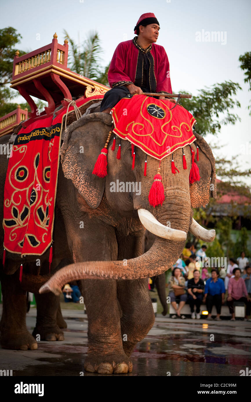 Mahout riding elephant to wedding ceremony, Lampang Thailand - Stock Image