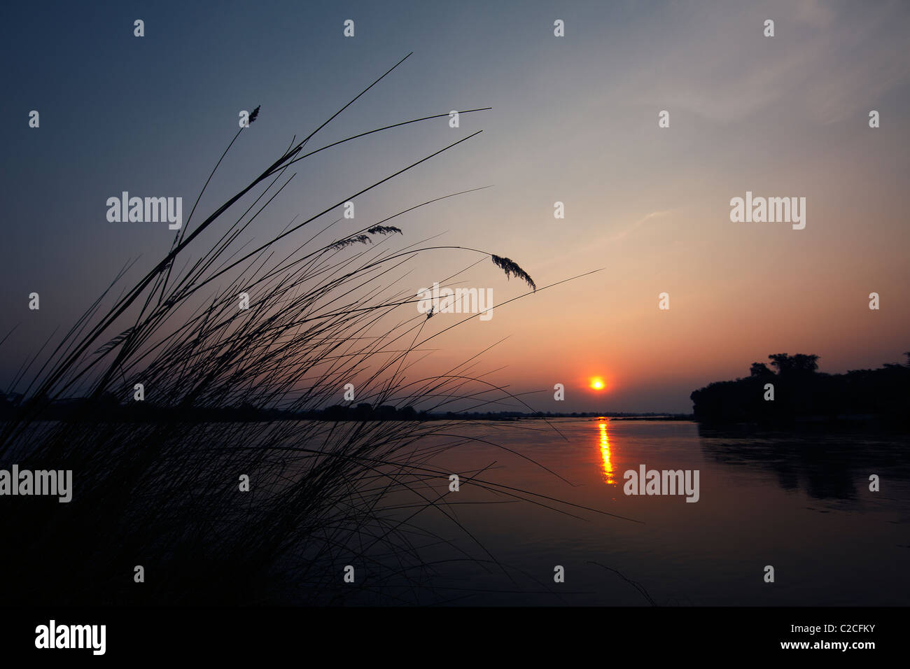 Coastal grasses silhouetted by sunset - Stock Image