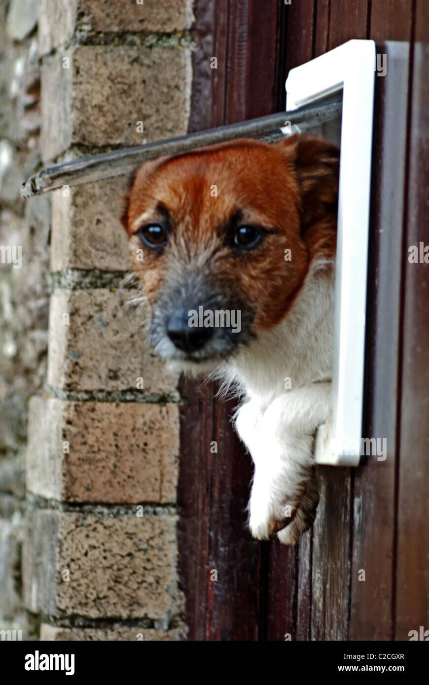 Dogflap Stock Photo
