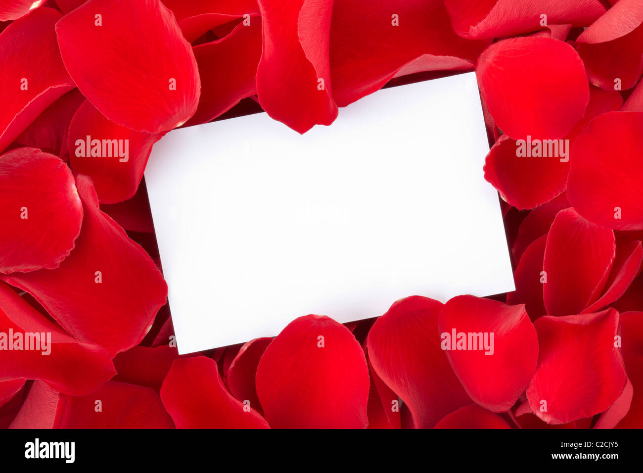 Red rose petals with blank card - Stock Image