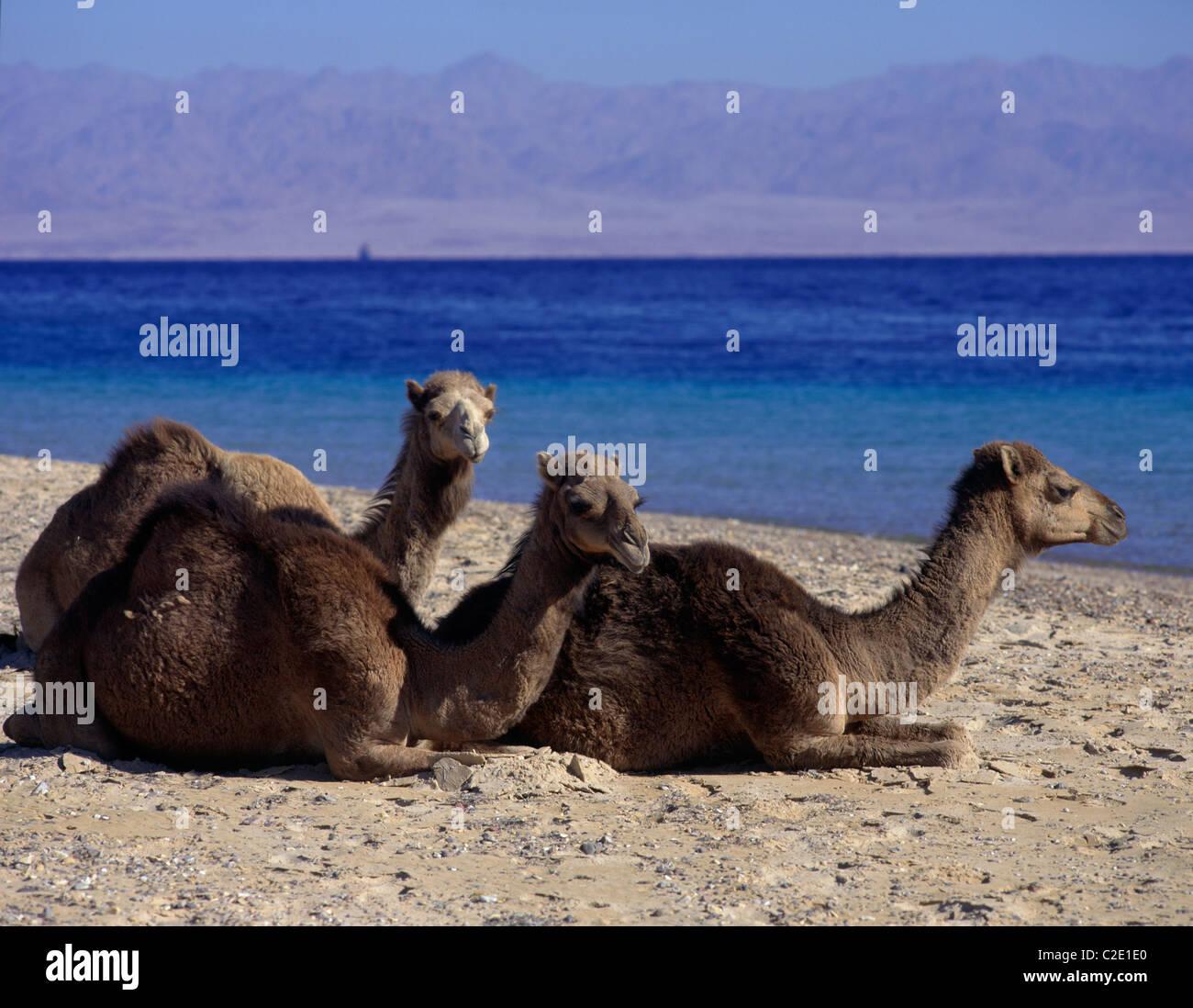 Nuweiba Gulf Of Aquaba Egypt - Stock Image