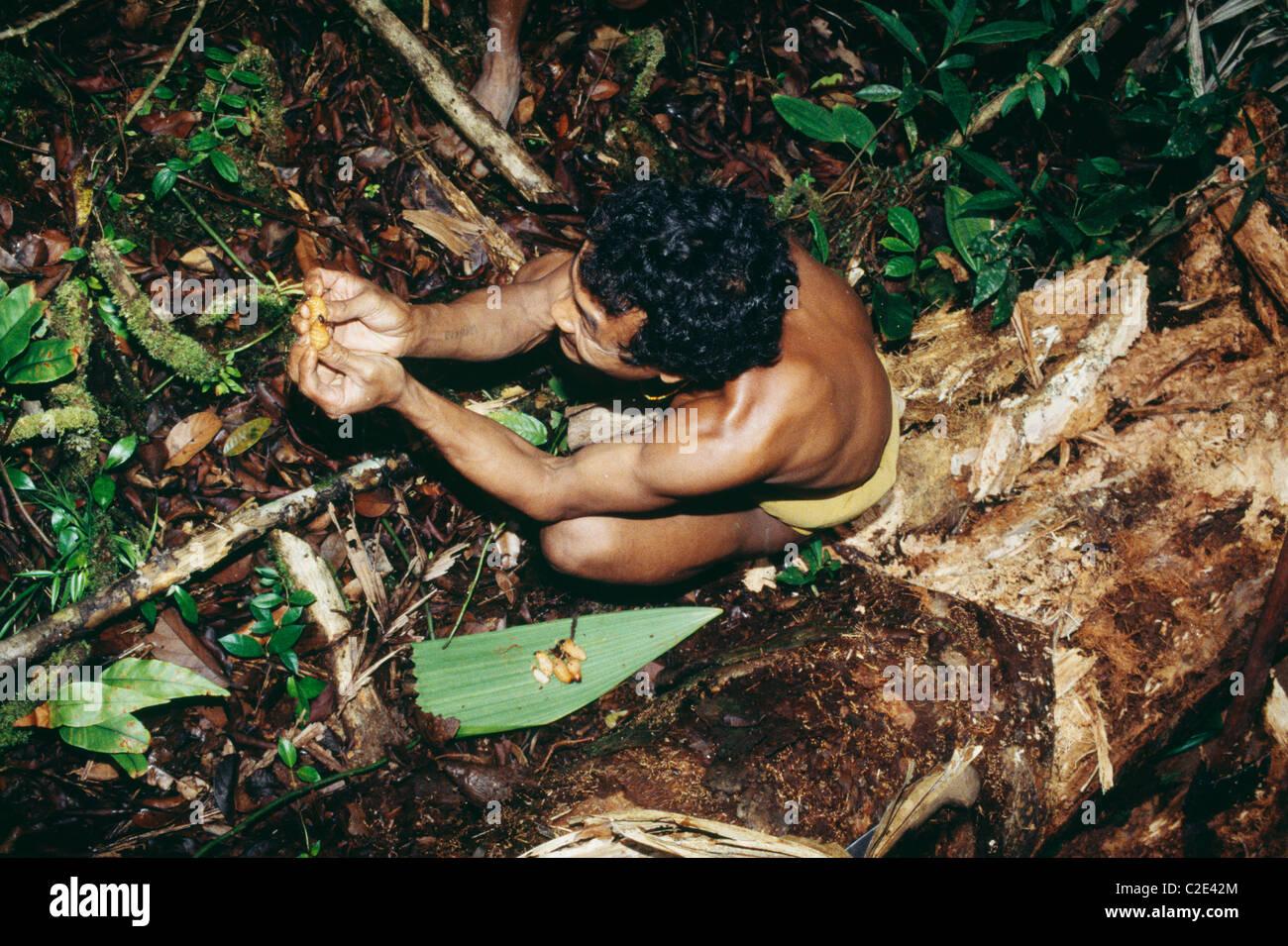 Siberut Island Sumatra Indonesia - Stock Image