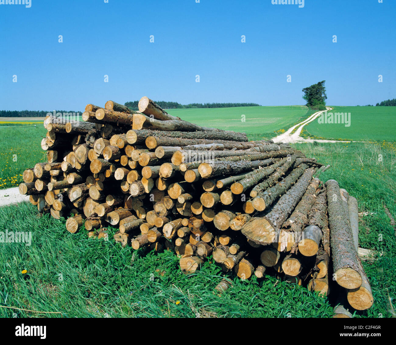 nature, seasons, sommer, meadow landscape, forestry, deforestation, wood pile, tree logs, behind a field road and - Stock Image