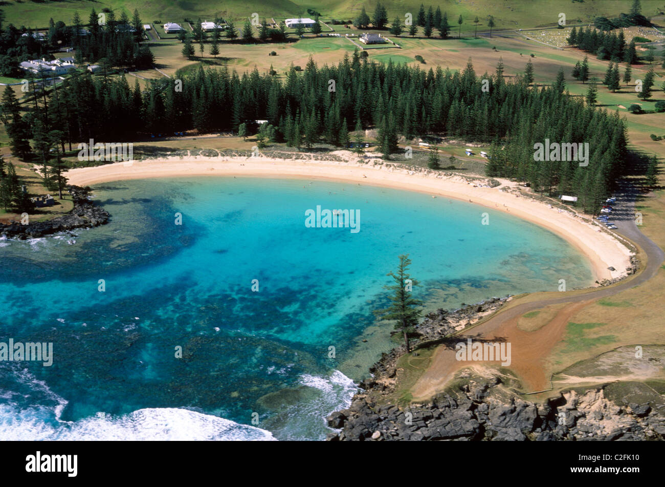 Norfolk Island Beauty