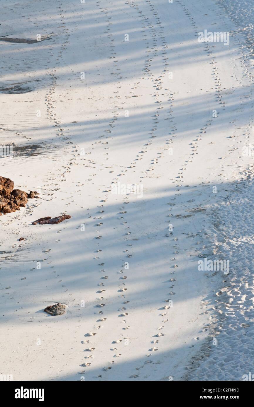 Footprints on sand - Stock Image