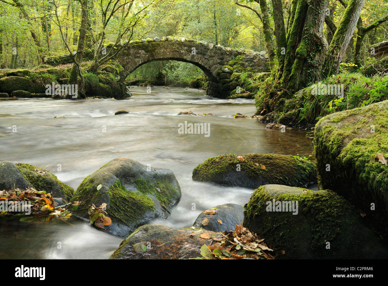 Moss covered rocks in the River Bovey at Hisley Woods, Devon. - Stock Image