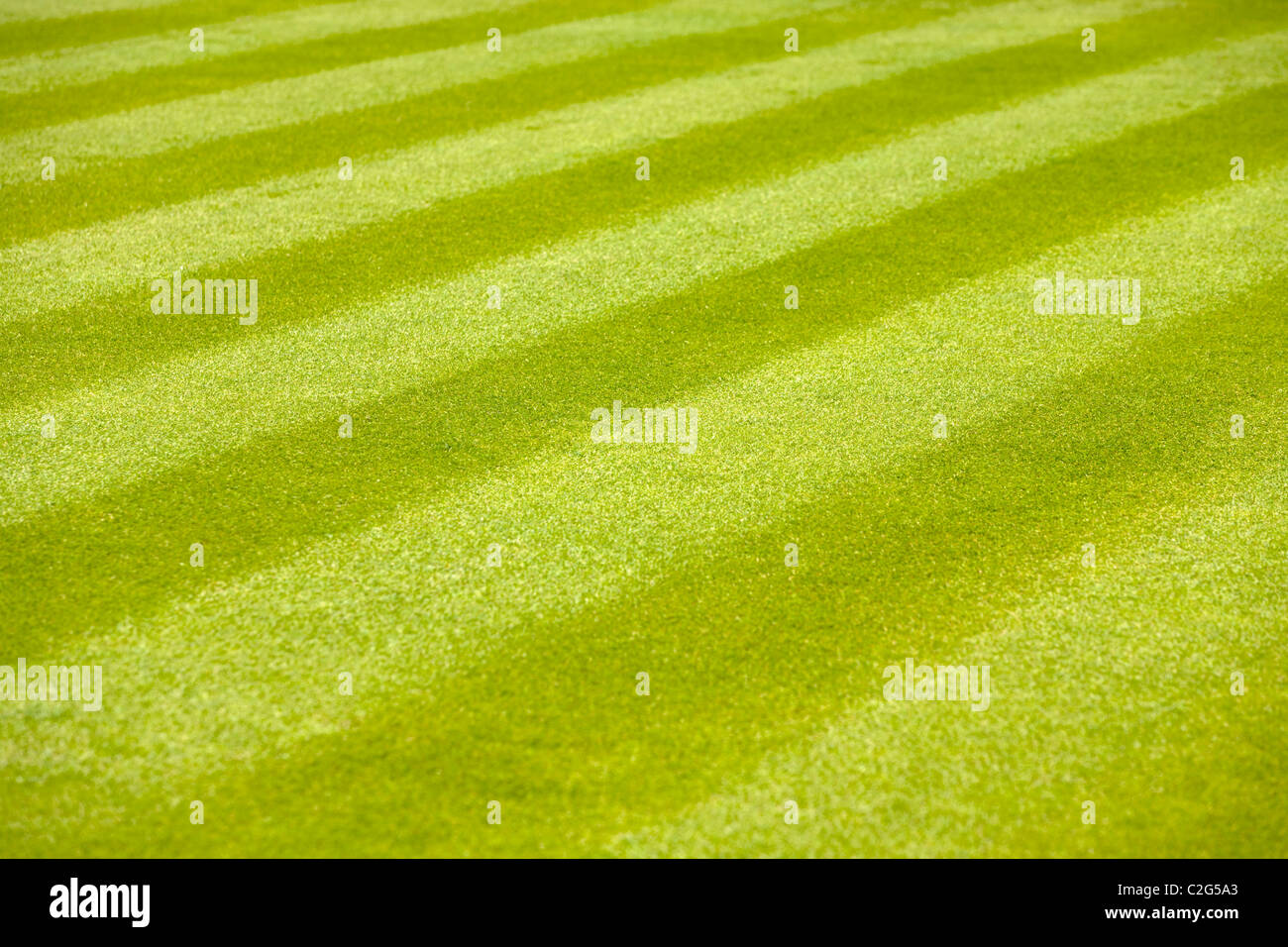 Lawn Stripes and Striped grass on a well defined lawn. - Stock Image