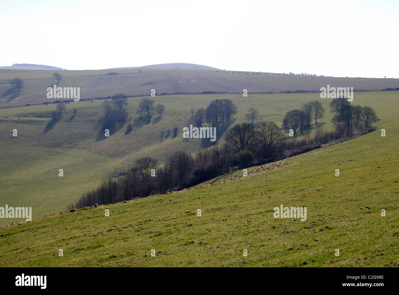Pastureland on the South Downs near Steyning. West Sussex. England. Early Spring - Stock Image