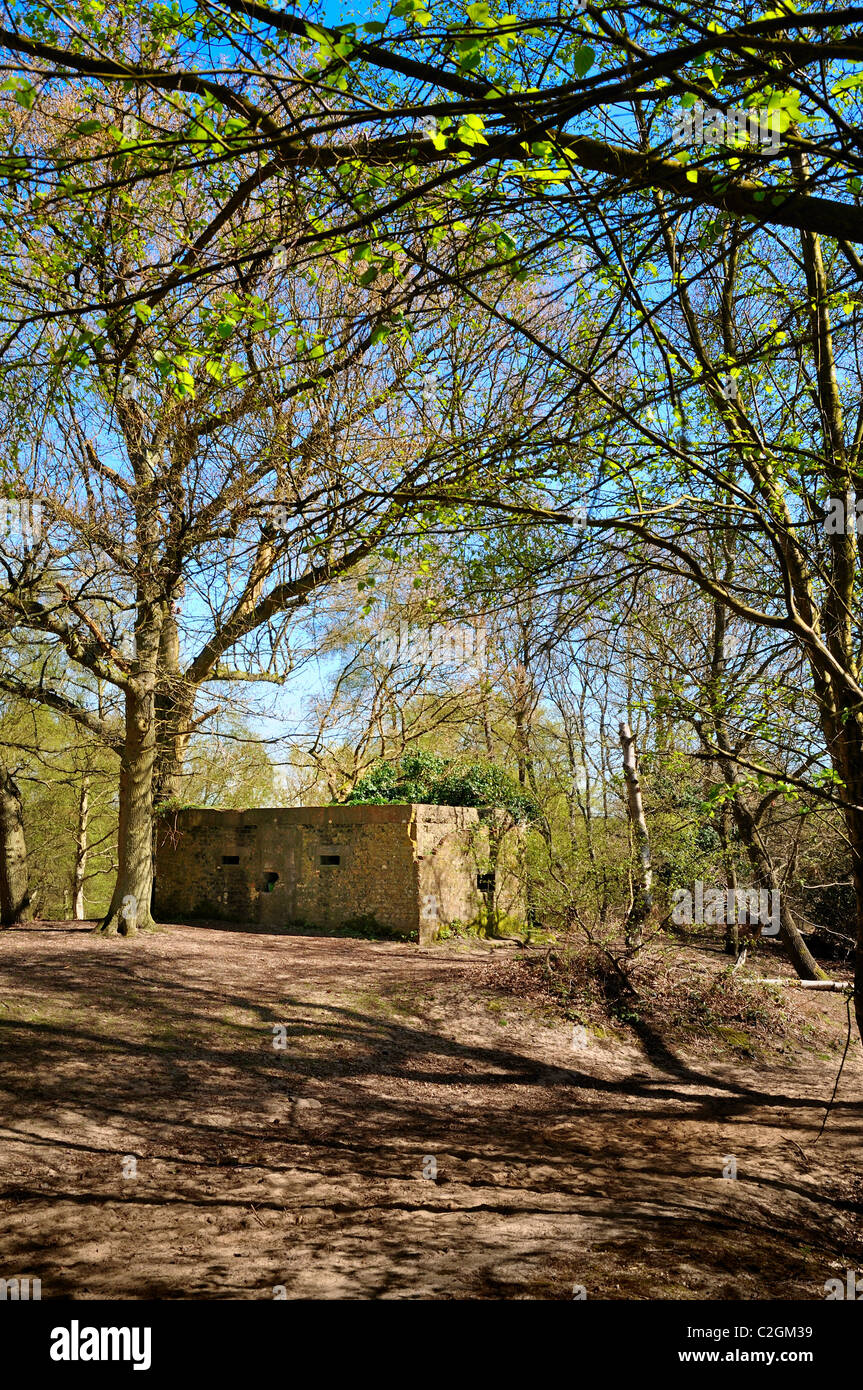 World War two pill box on the North Downs Way ,near Chilworth ,Surrey - Stock Image