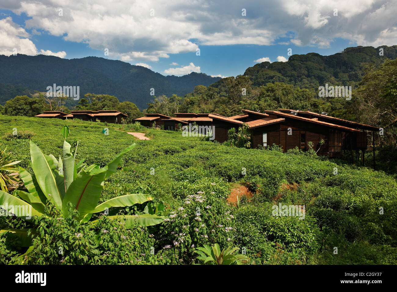 Nyungwe Forest Lodge, Parc National de Nyungwe, Rwanda, Africa - Stock Image