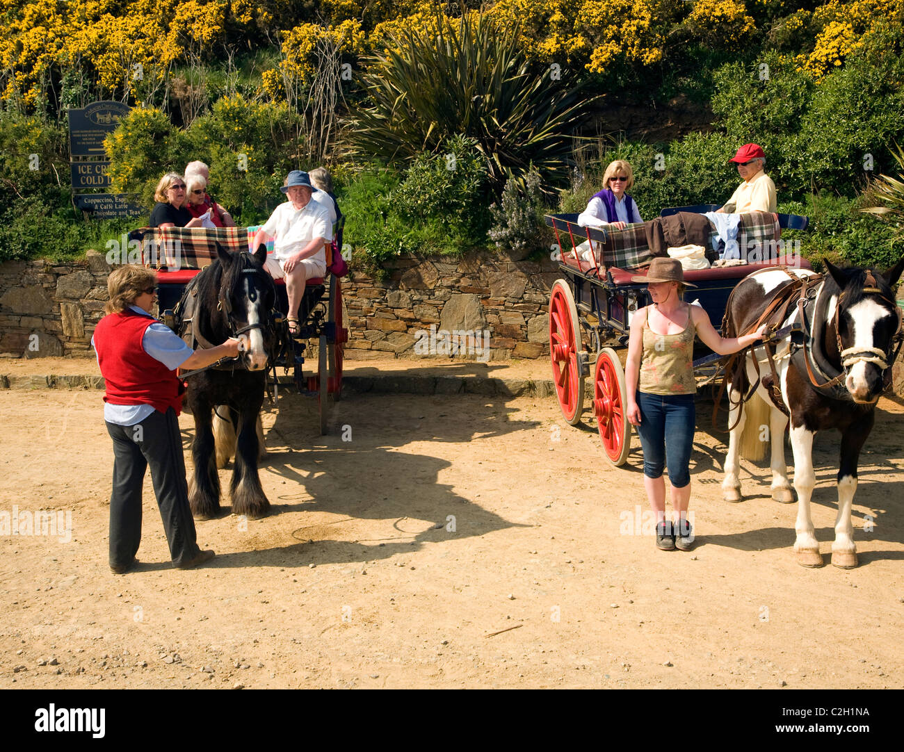 Tourists horse drawn carriages island Sark Channel Islands - Stock Image
