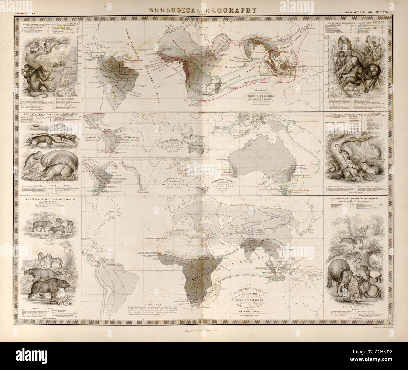 Zoological Geography; Birds of the World; Primates, Pachydrms, Marsupials & Primates - Stock Image
