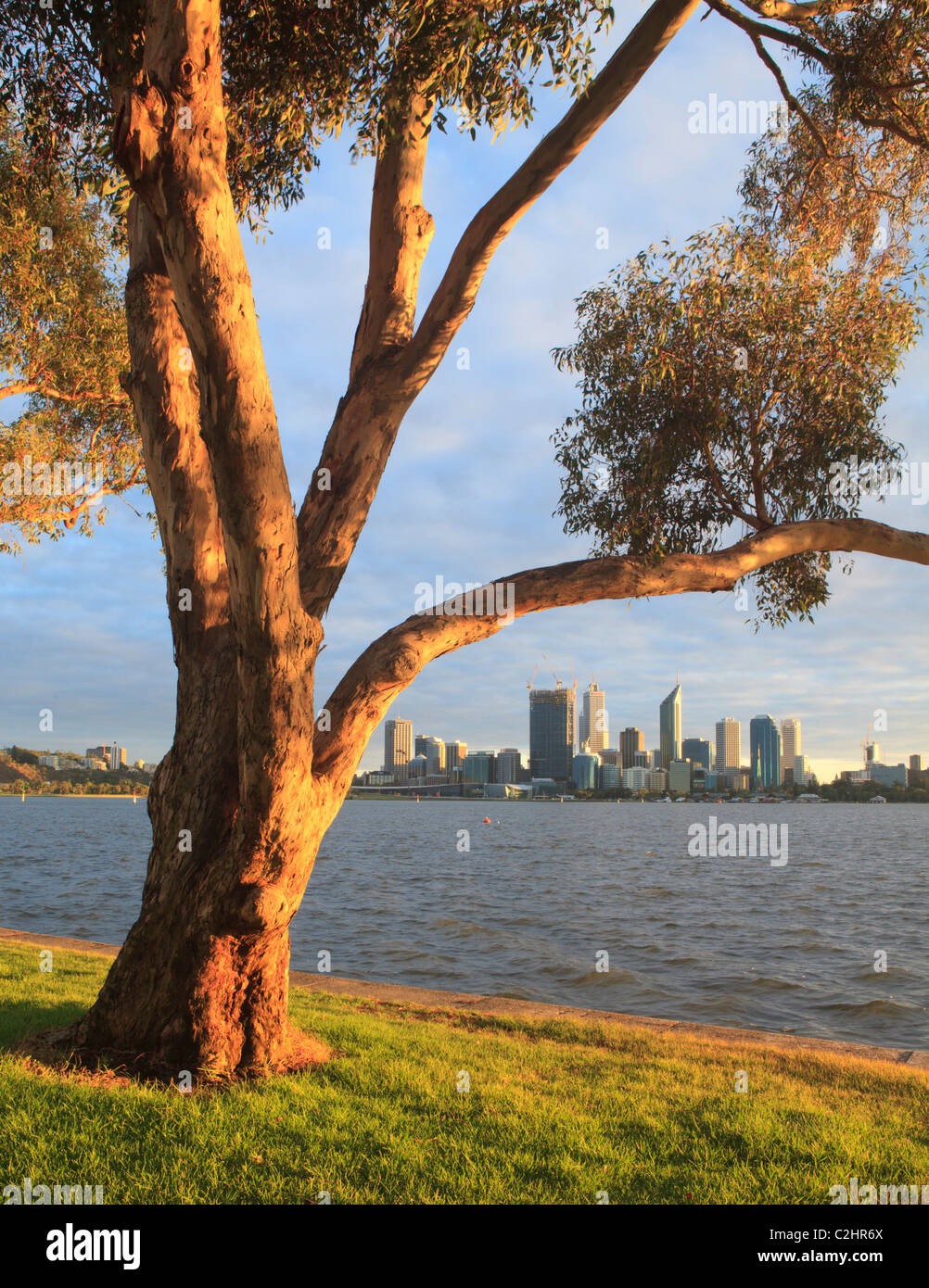 Eucalyptus tree on the banks of the Swan River with the city in the distance. - Stock Image