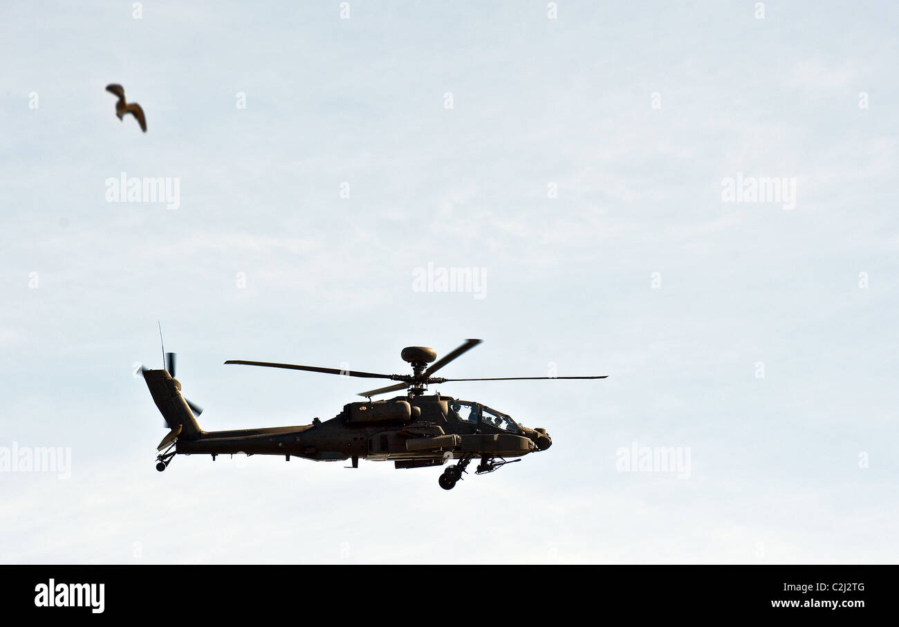 A British Army WAH-64 Apache helicopter.  Photograph by Gordon Scammell - Stock Image