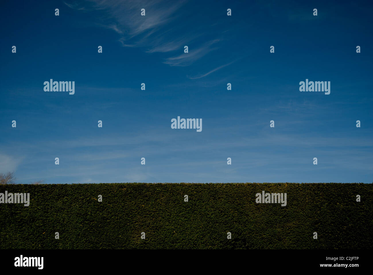Hedge, blue sky and wispy clouds with space for text - Stock Image