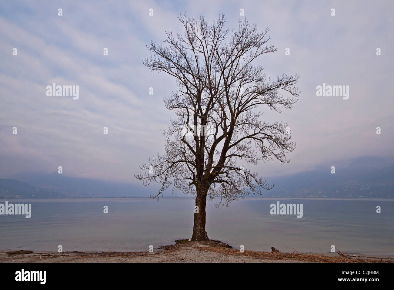 a beautiful wintertree at the Lake Maggiore - Stock Image