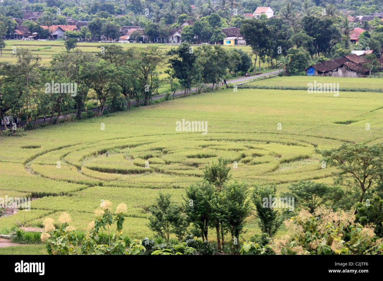 Indonesian crop circle - Stock Image