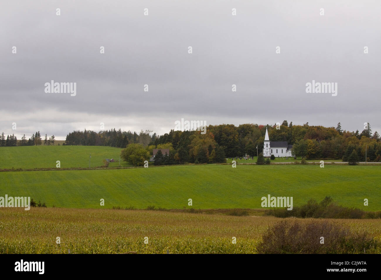 PEI rural scene, with cornfield and white church in the background, Queens County, Prince Edward Island, Canada - Stock Image