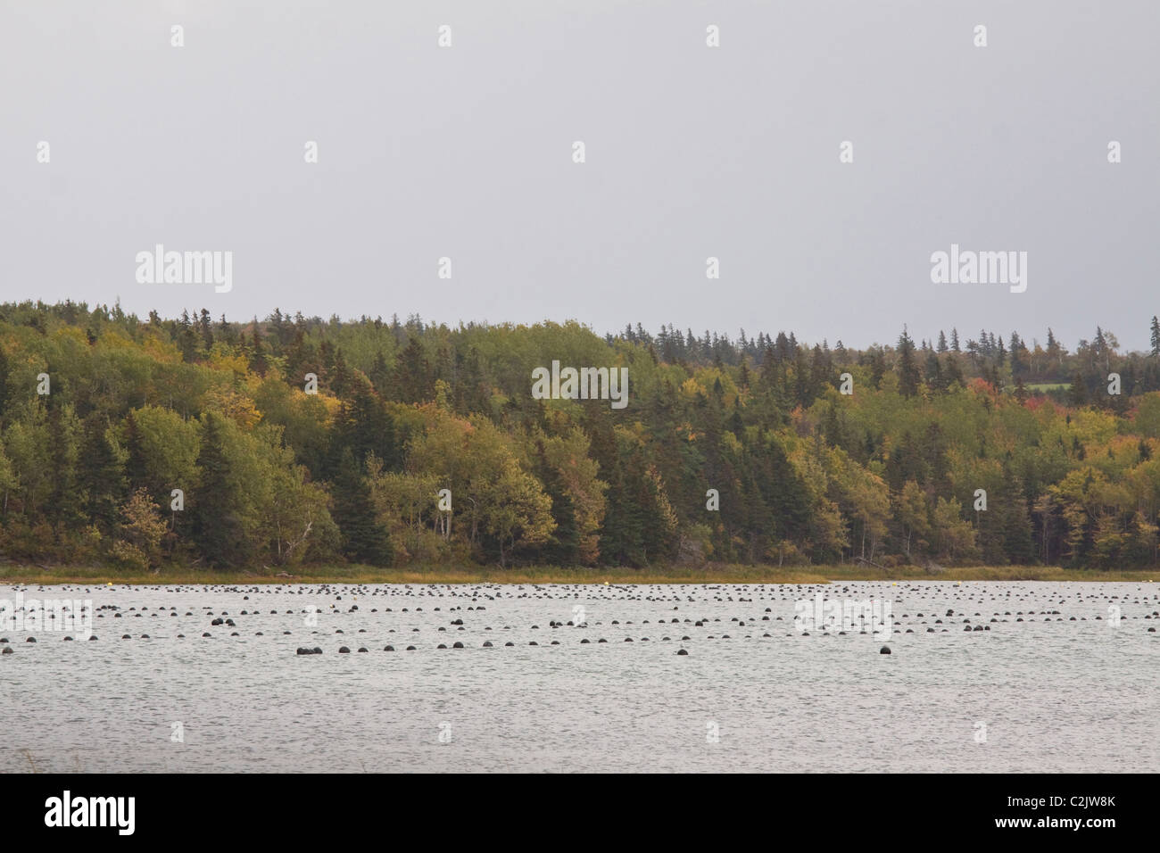 Rows of mandmade mussel beds, Queens County, Prince Edward Island, Canada - Stock Image