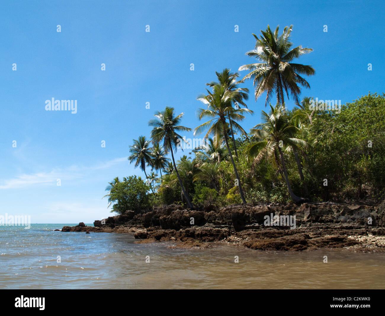 Palm trees on Boipeba Island, Bahia, Brazil Stock Photo