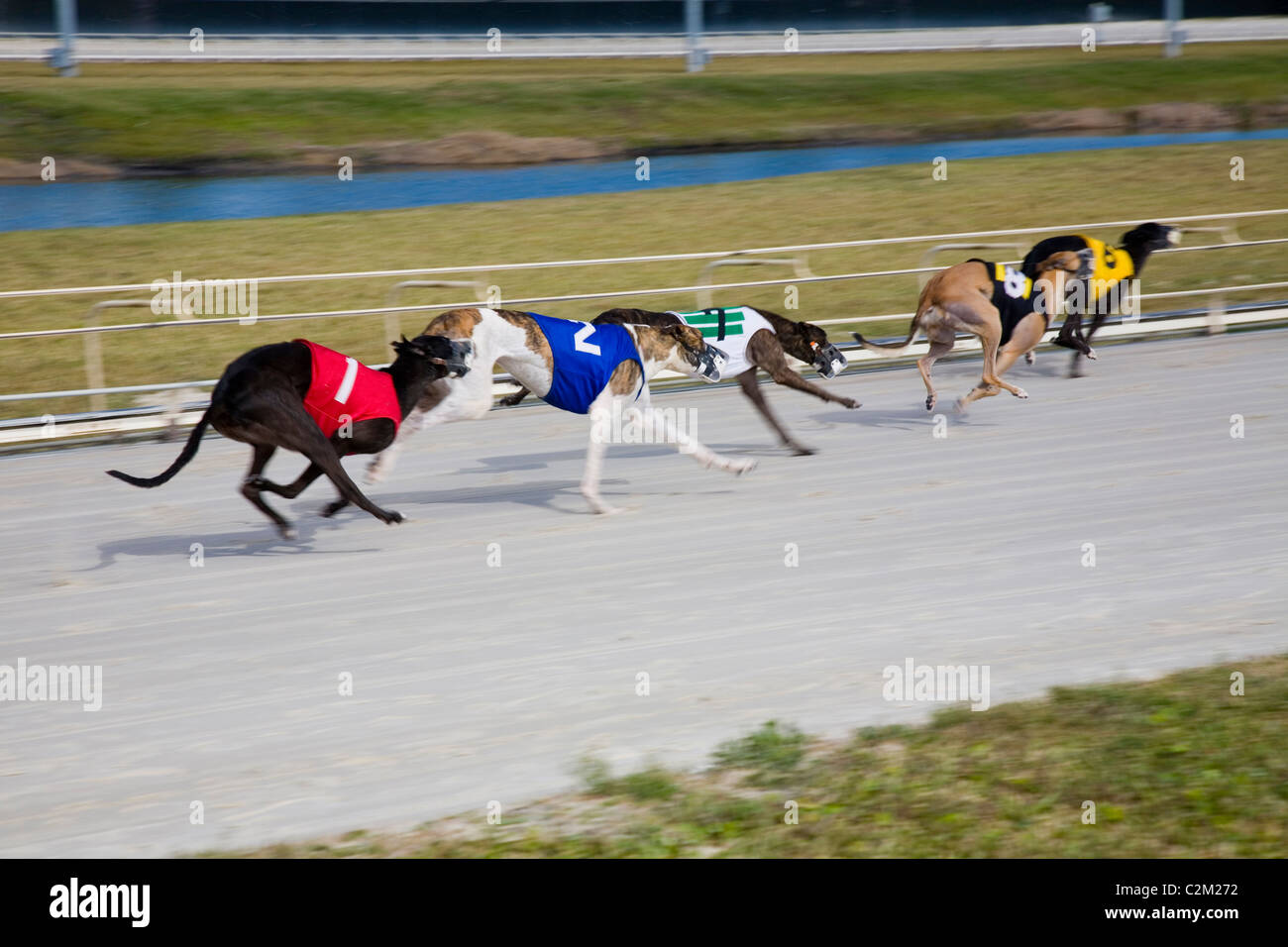 Daytona Beach Kennel Club offers greyhound racing action and