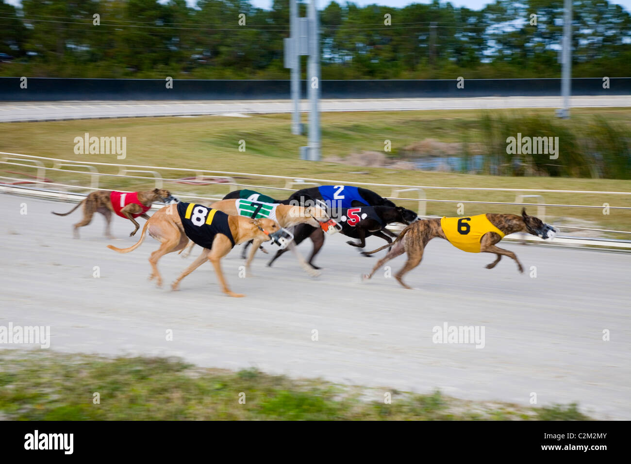 Daytona Dog Track >> Daytona Beach Kennel Club Offers Stock Photos Daytona