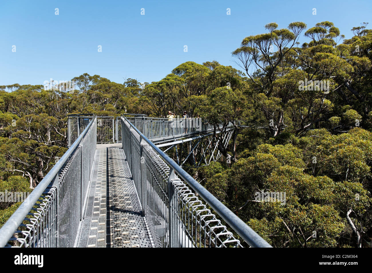 Valley of the Giants tree top walk, Walpole-Nornalup National Park, Southwest Australia - Stock Image