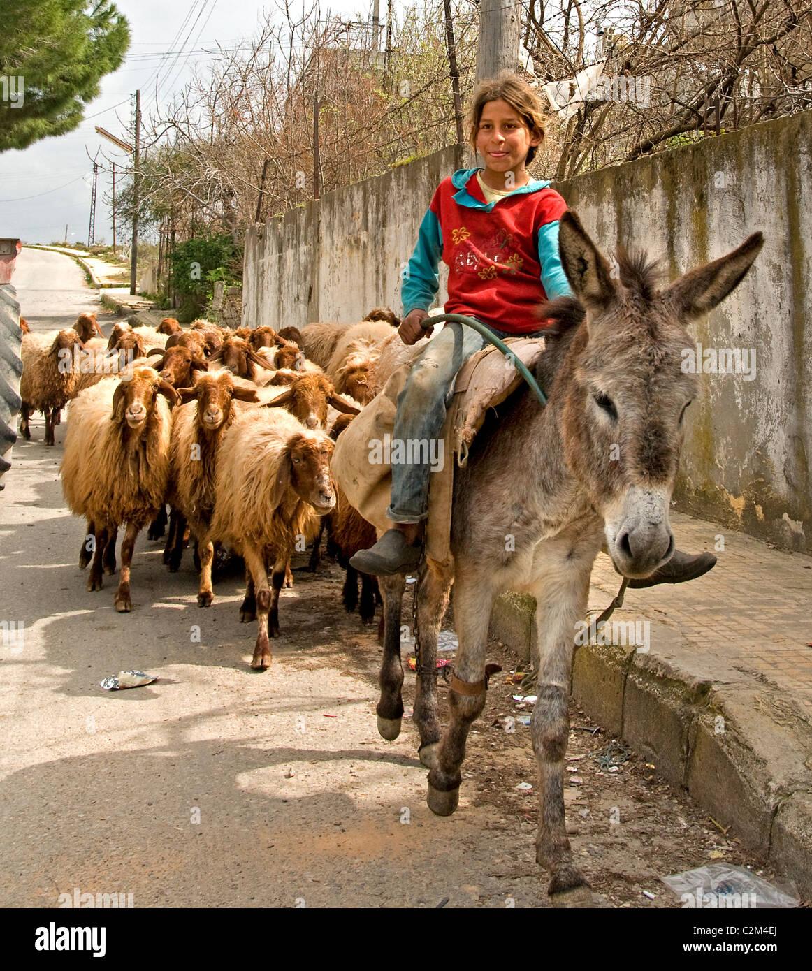 Syria Syrian Little Young Girl Shepherd Donkey sheep street - Stock Image