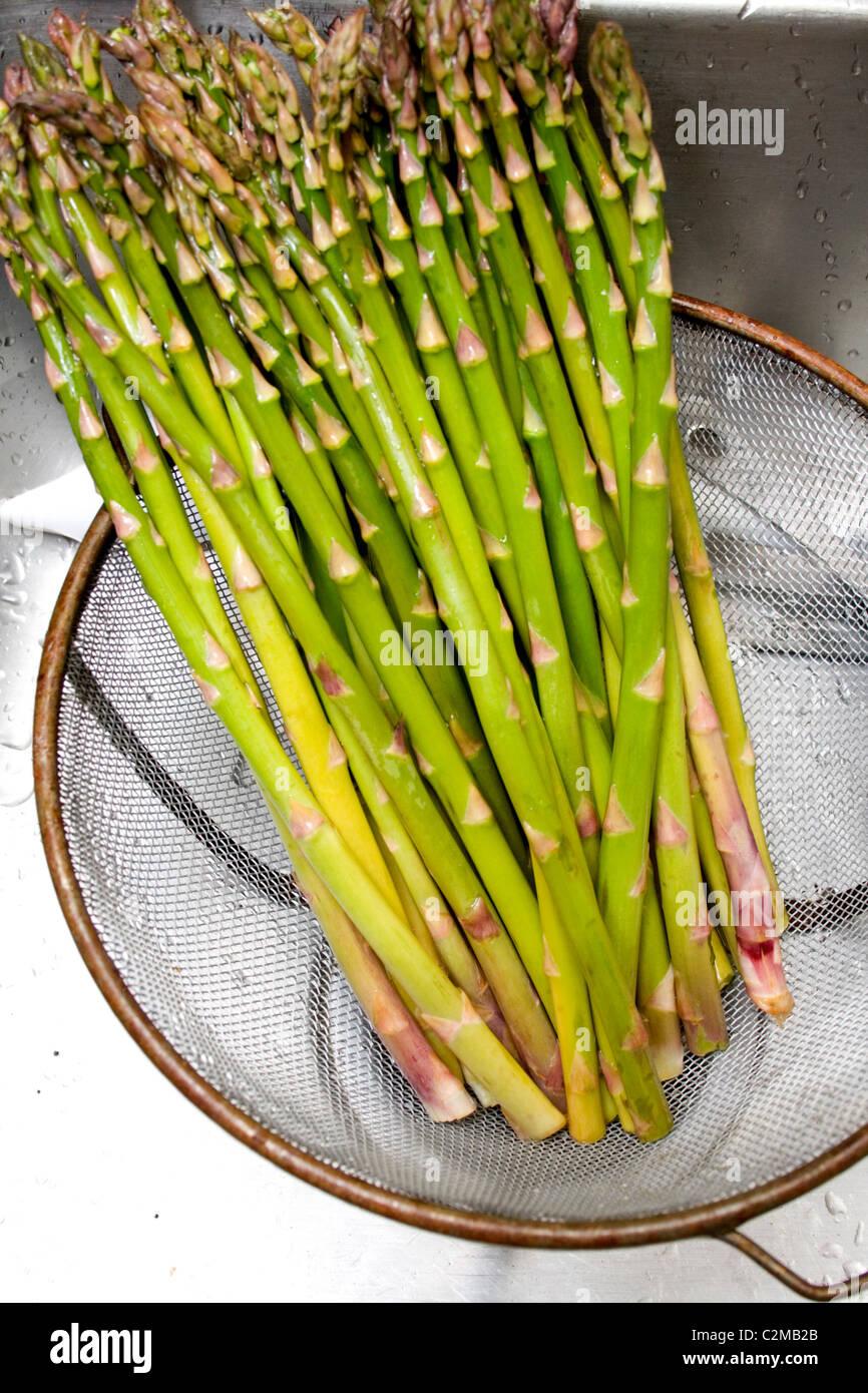 Fresh asparagus draining in strainer. St Paul Minnesota MN USA - Stock Image