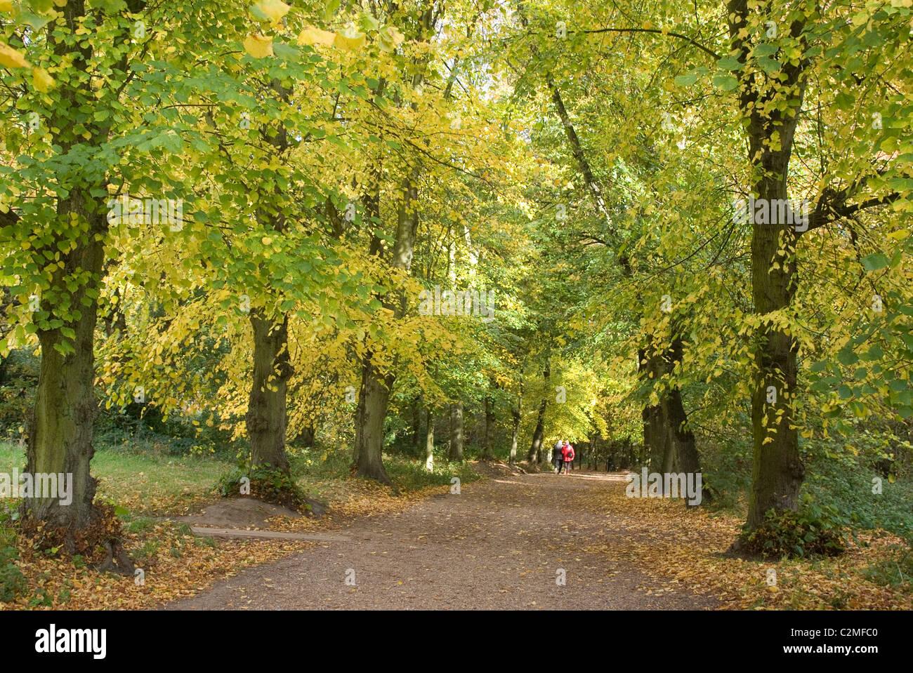 Autumn trees in Hampstead Heath - Stock Image