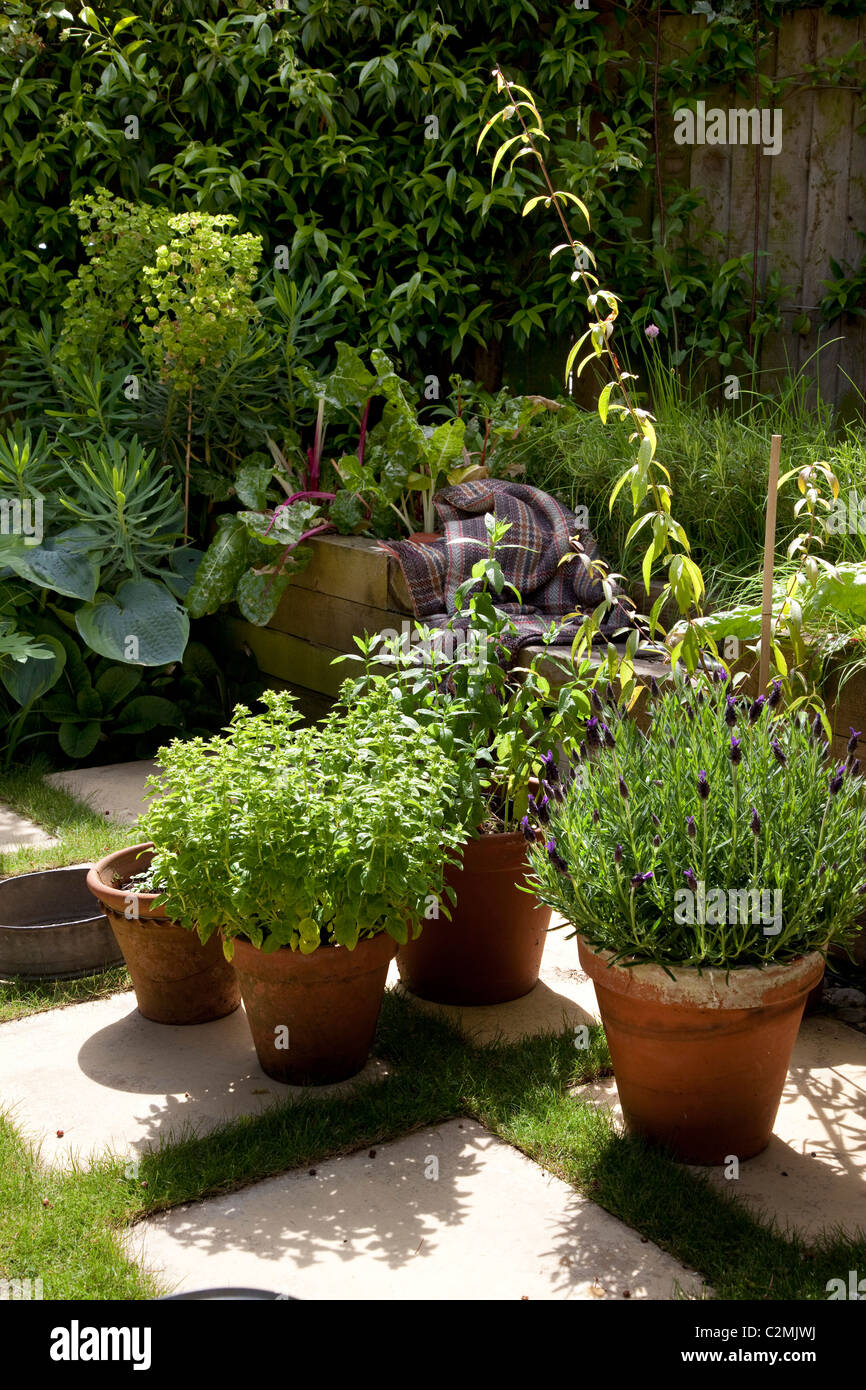 Suburban Garden. Detail of herbs in earthenware pots on checkerboard stone and grass paving - Stock Image