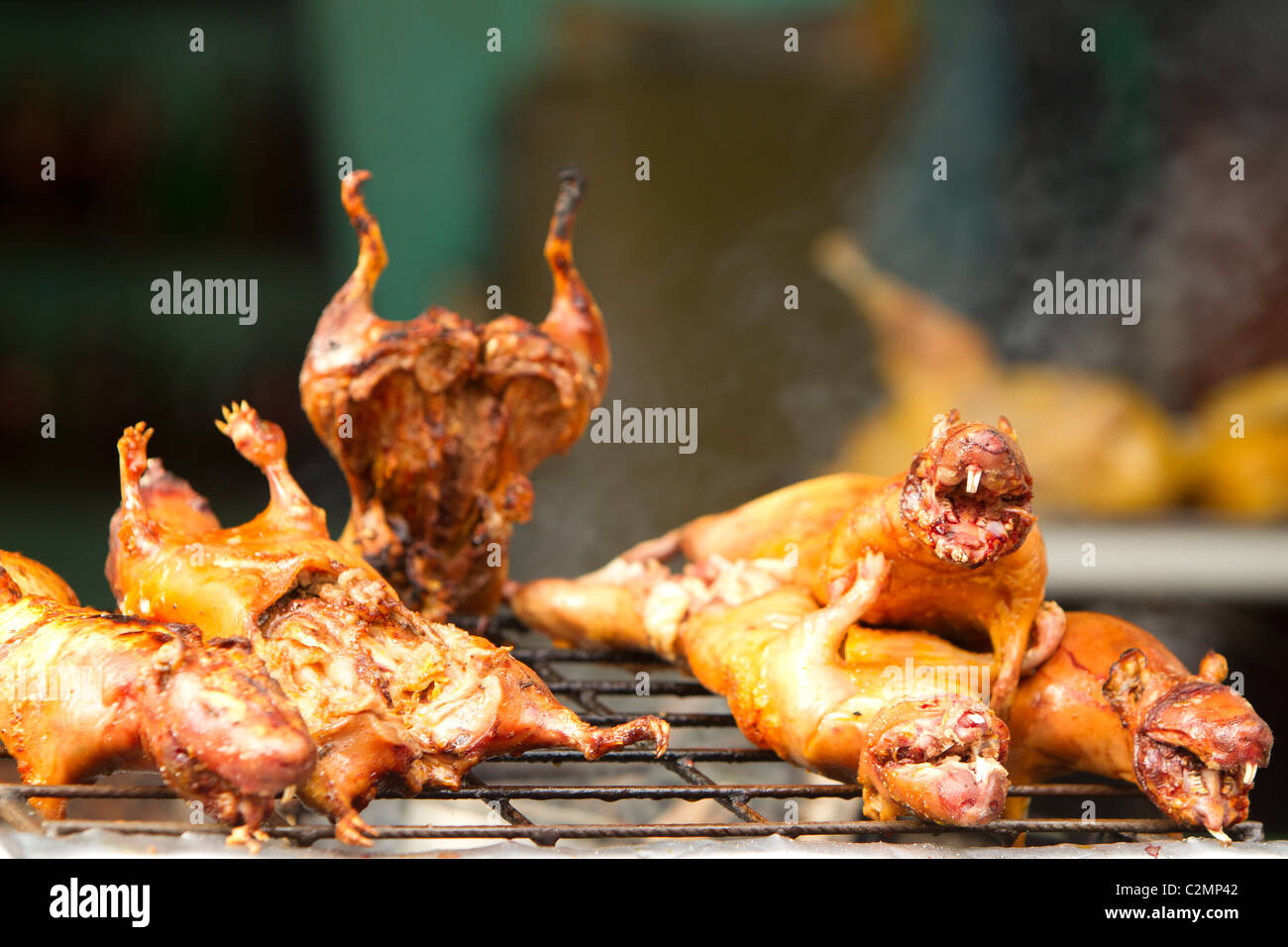 roasted guinea pig also called cui traditional food in ecuador stock