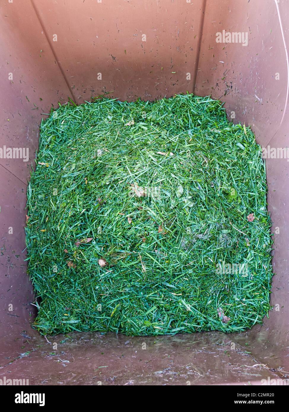 Grass cuttings inside a Garden Waste Wheelie Bin England UK - Stock Image