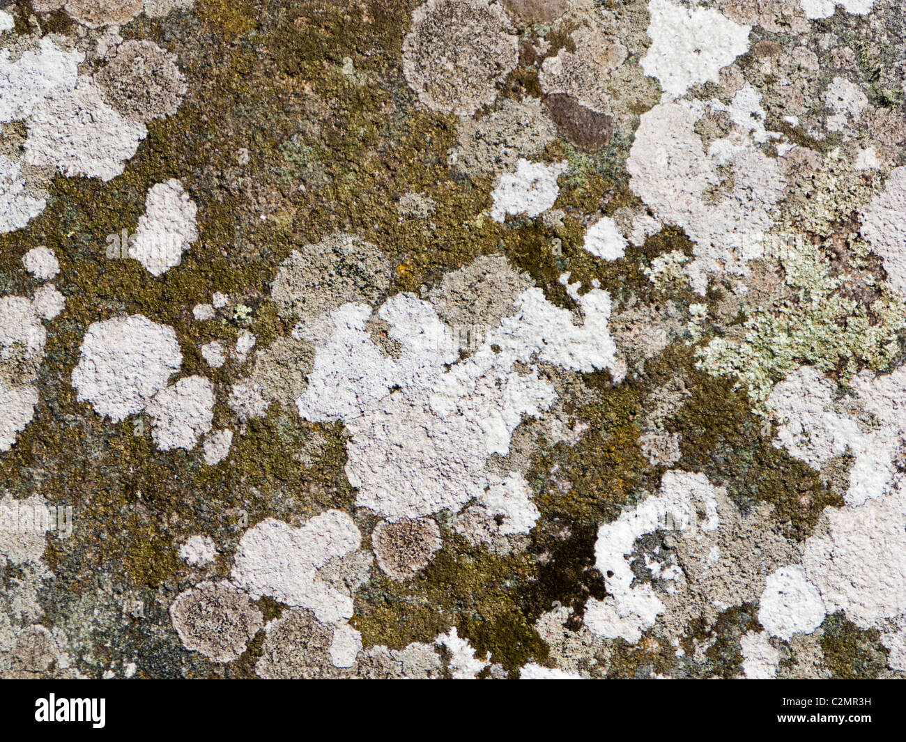 Lichens and mosses on granite stone rock close up - grey abstract stone texture - Stock Image