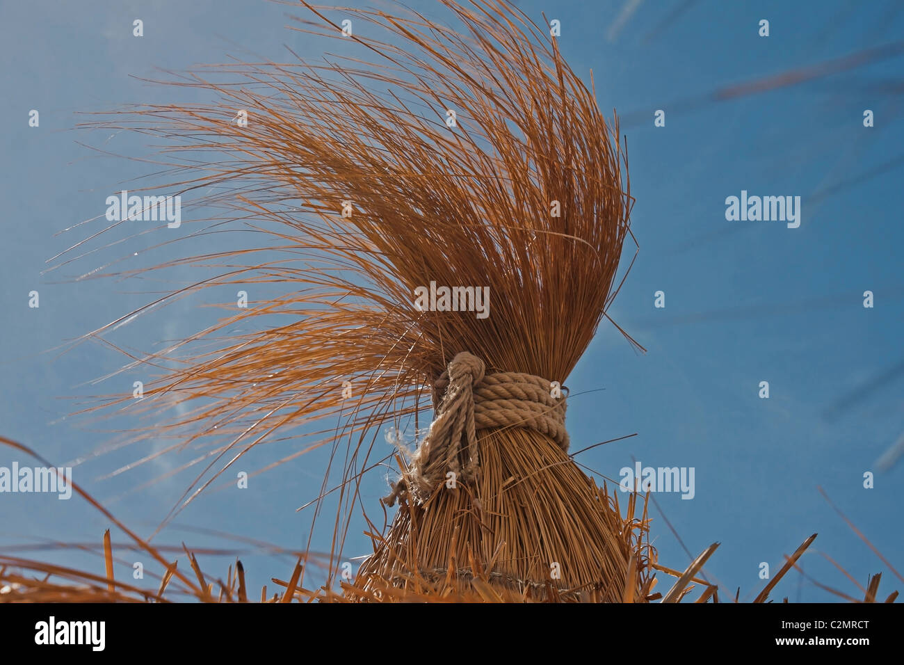a windy day - Stock Image