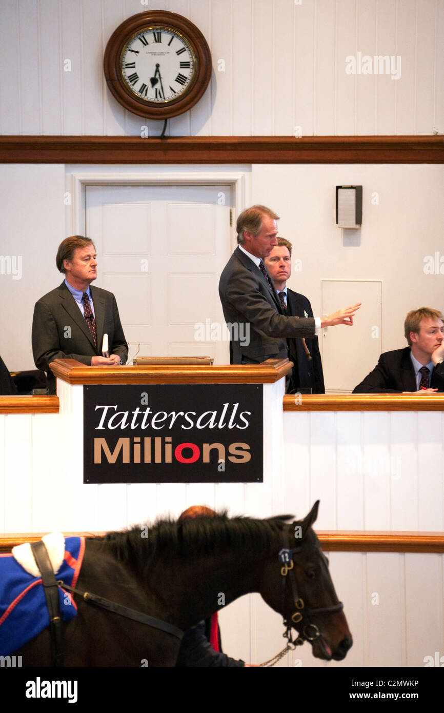 A racehorse auction of 2 year olds at Tattersalls horse sales, Newmarket Suffolk UK - Stock Image
