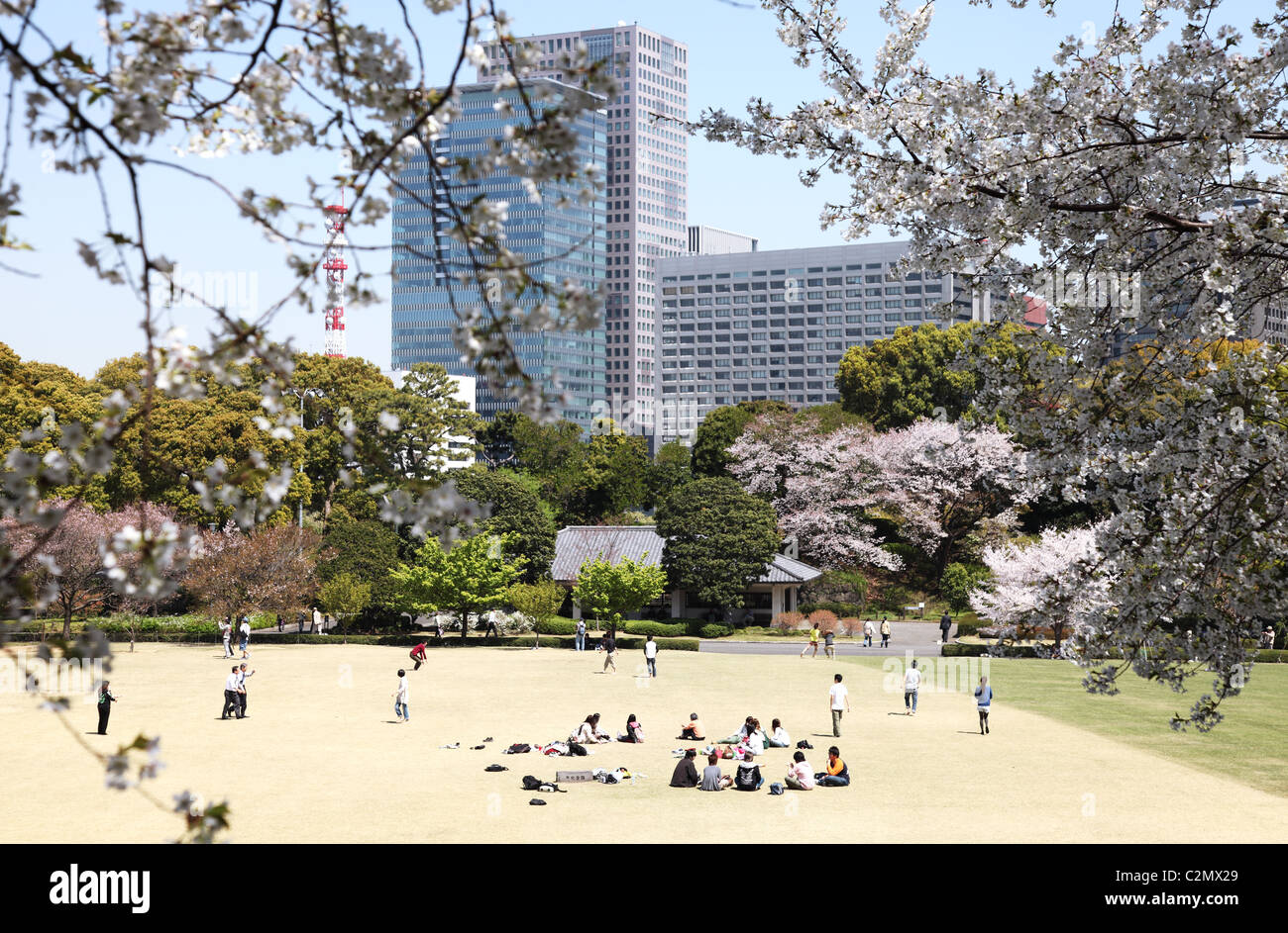 Cherry blossoms in the Imperial Palace East Garden Tokyo Japan Stock Photo