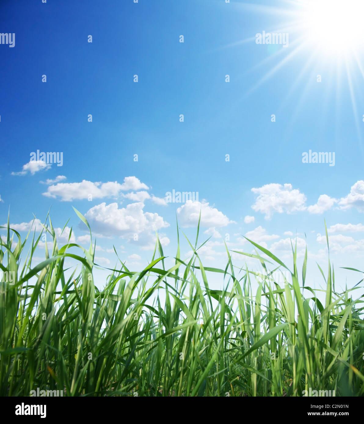Green grass and sunny sky Stock Photo