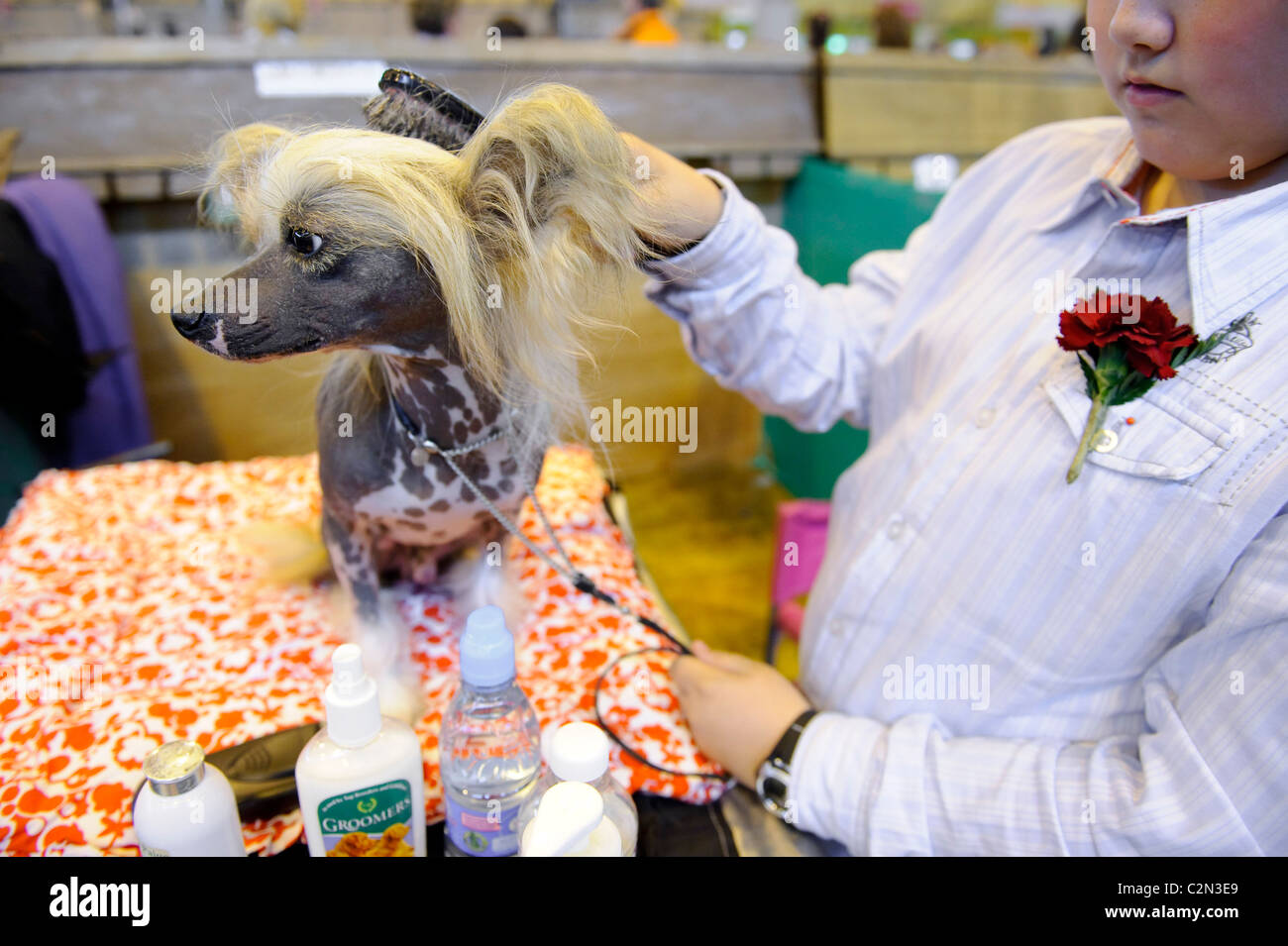 Atomosphere at the third day of the annual dog show 'Crufts' held at the Birmingham NEC Arena, 13th March - Stock Image