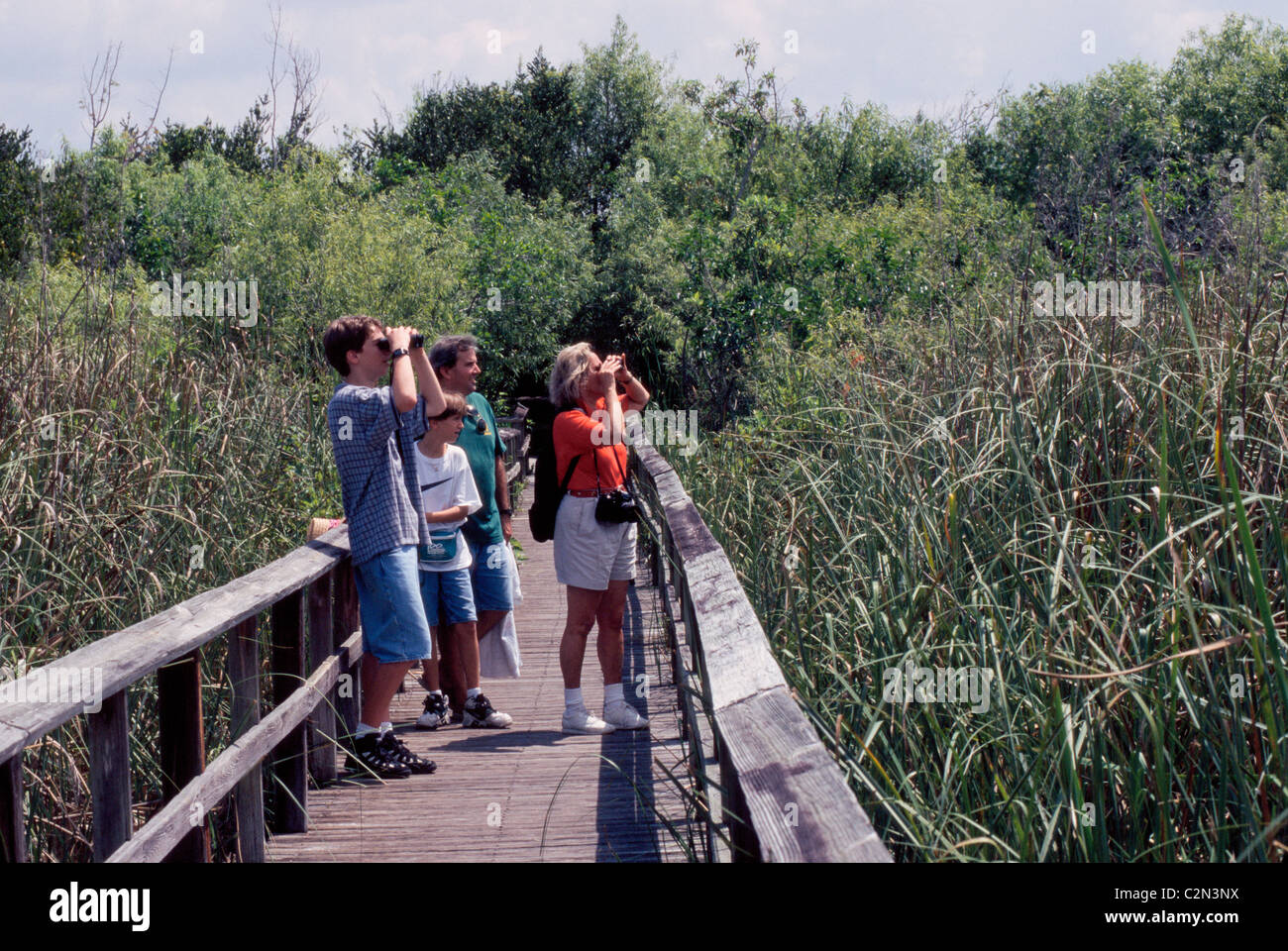 A family searches with binoculars for birds from an elevated boardwalk above this wetlands wilderness in Florida's - Stock Image