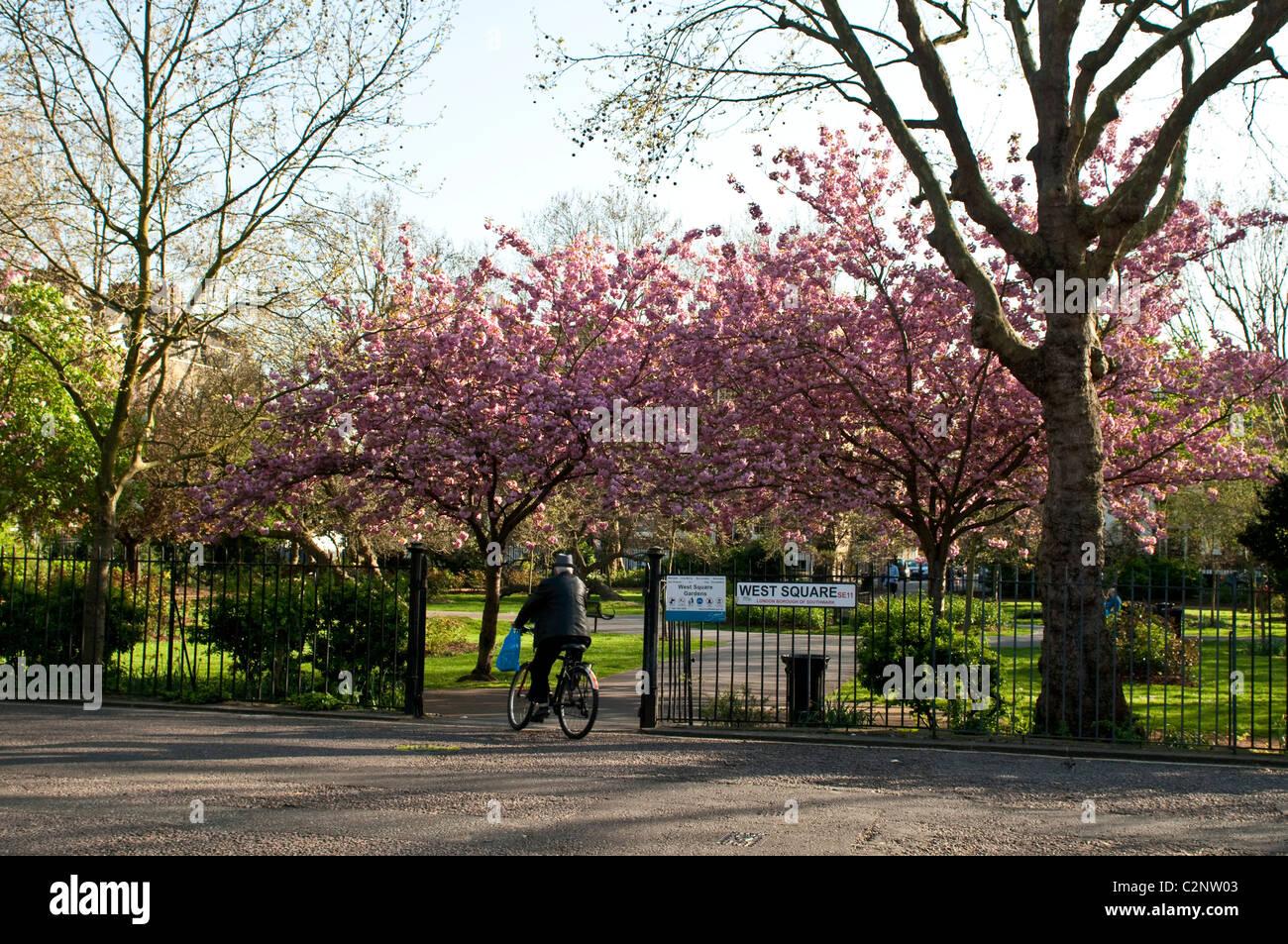Communal gardens, West Square, SE11, Southwark, London, UK - Stock Image