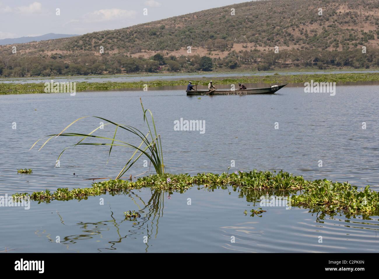 Fishermen in dugout canoe surround by water hyacinth invading Lake Naivasha Elsamere Rift Valley Kenya Stock Photo