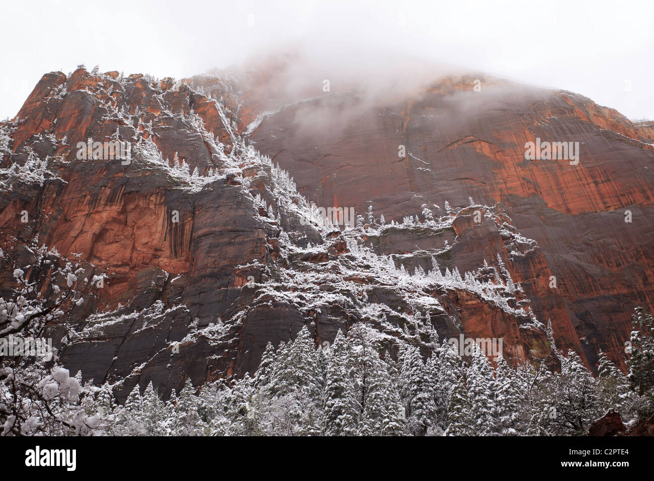 Trees dusted by snow on the walls of Zion Canyon in Utah (USA) - Stock Image