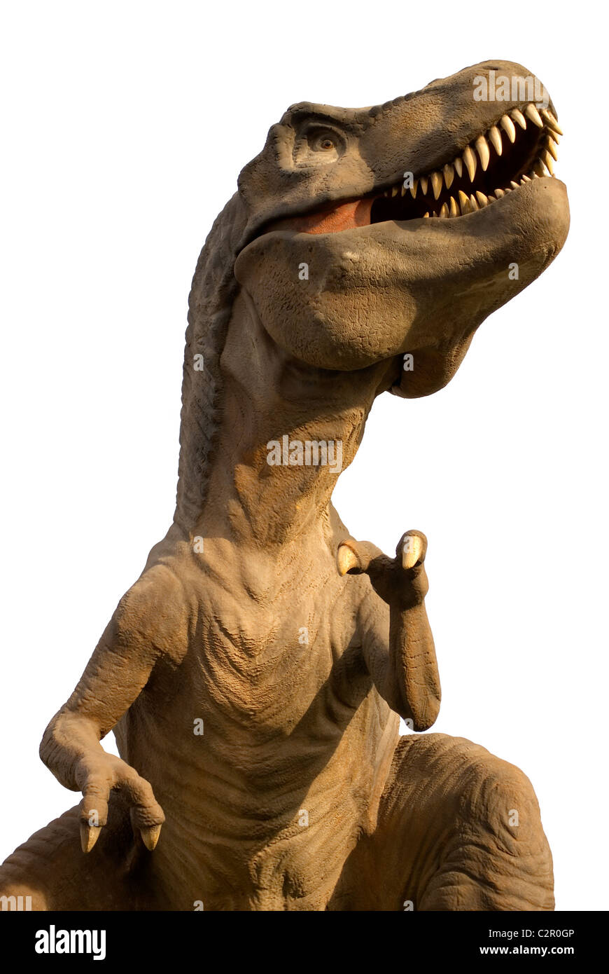 Tyrannosaurus Rex isolated in white, T-Rex - Stock Image