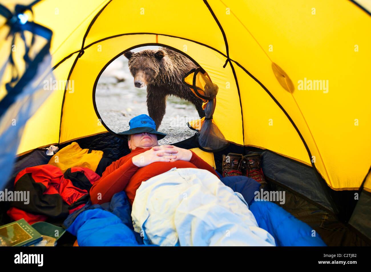 COMPOSITE Grizzly bear looking through tent door with man inside, Alaska COMPOSITE - Stock Image