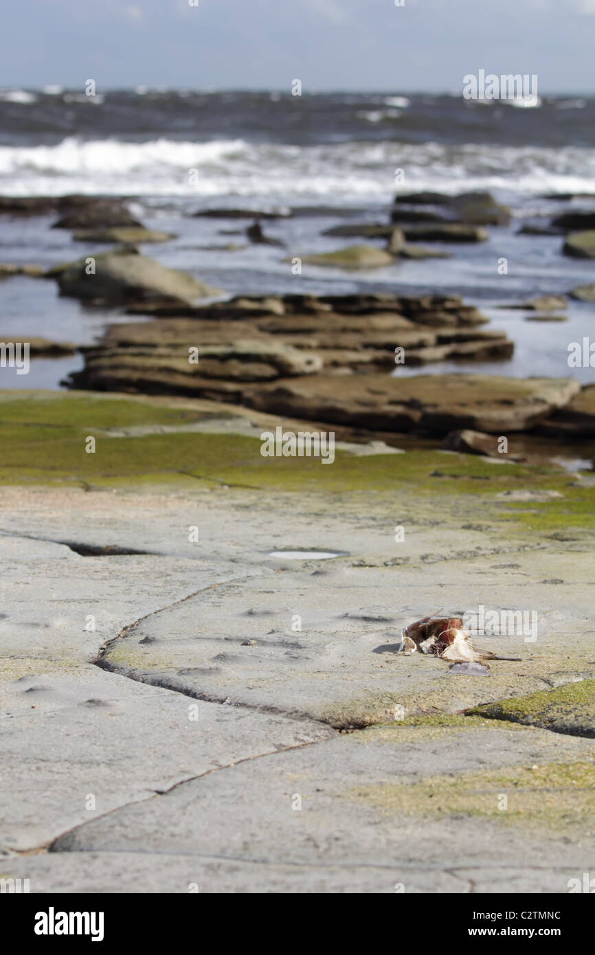 Fish Trapped and Died on a Rocky plan at the Beach - Stock Image
