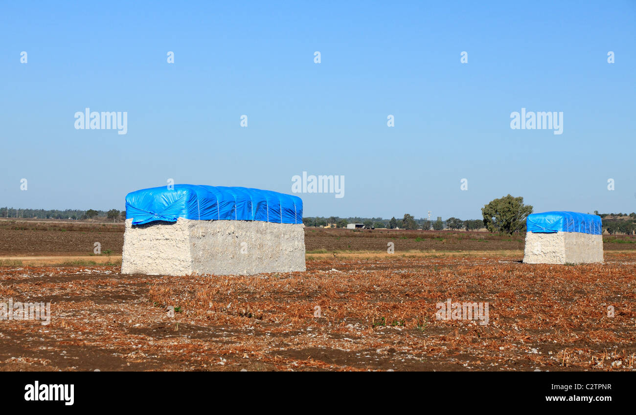 Cotton Modules in a field following harvesting. - Stock Image