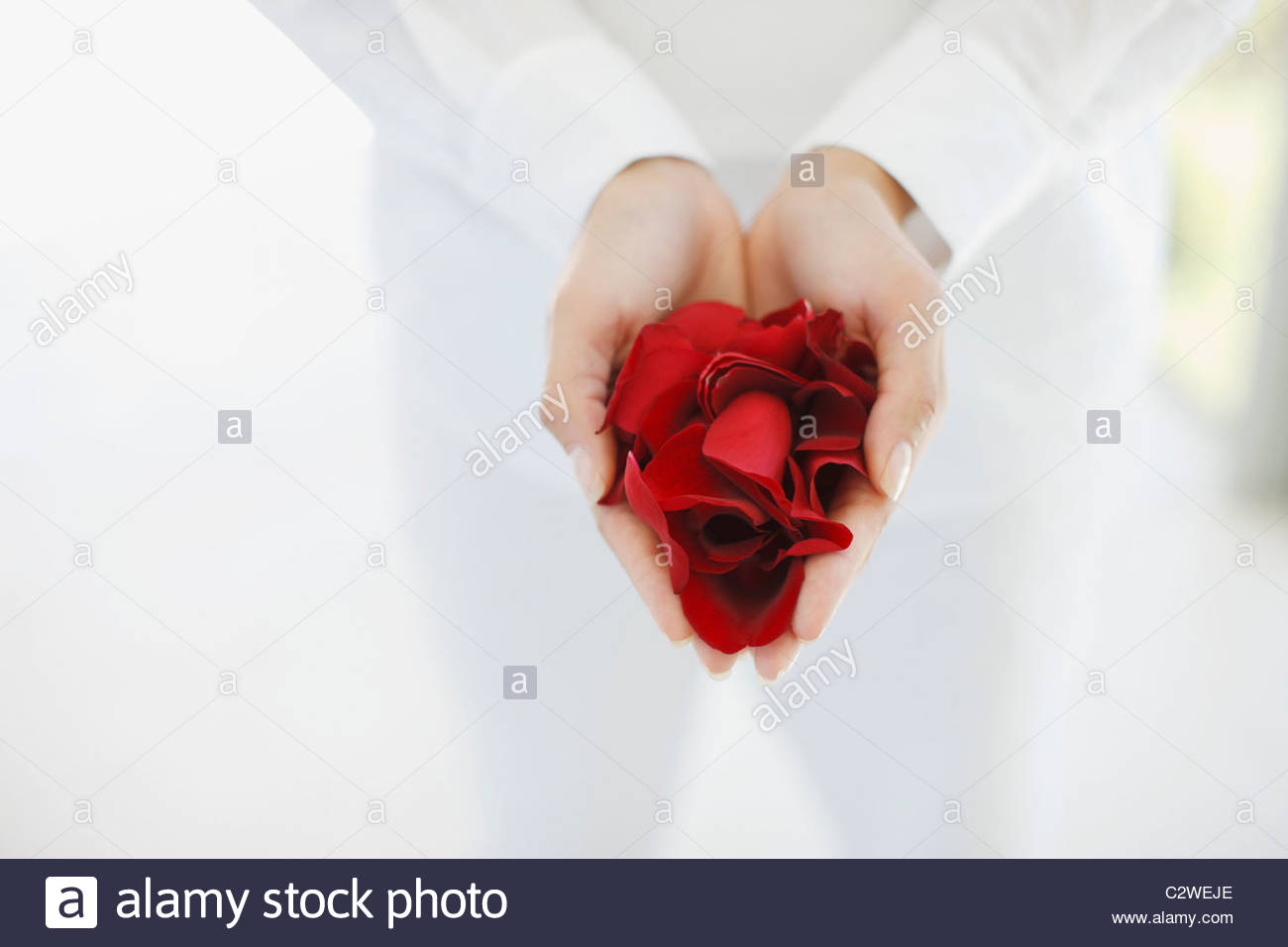Woman holding handful of flower petals - Stock Image
