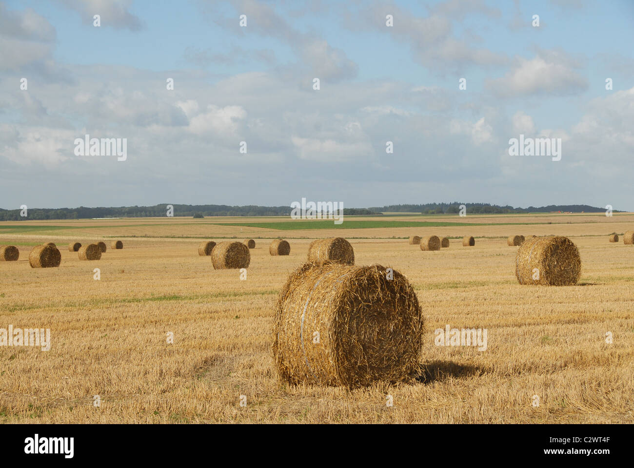 Cornfield after harvest in Northern France's Picardie region with golden straw balls. - Stock Image